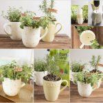 Ý tưởng trồng cây thảo mộc trong nhà cho cuộc sống thoải mái dễ chịu